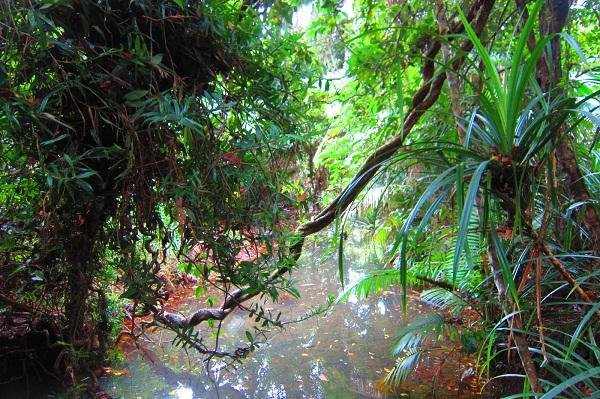 Dschungel - Cape Tribulation