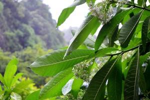 Regentropfen auf Blättern